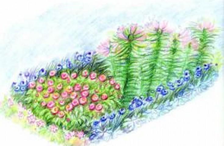 Клумбы и цветники из