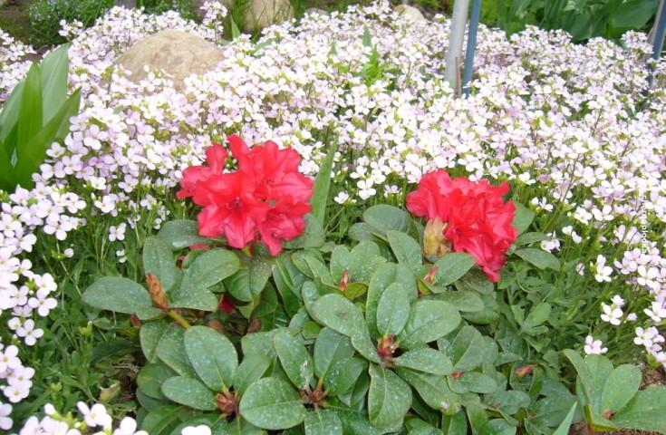 Список и фото многолетних цветов