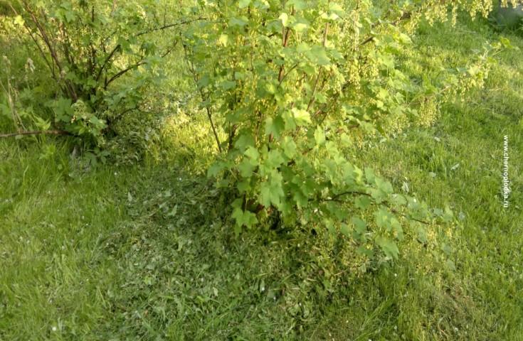 Весенняя обработка деревьев и
